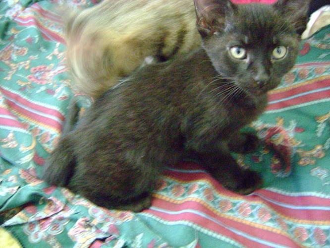 2 Free Kittens