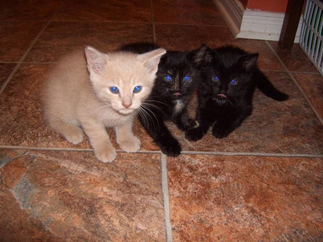 3 FREE Kittens !