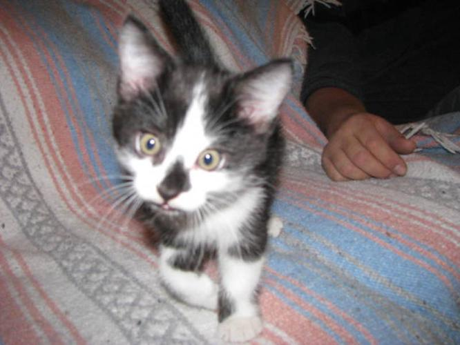 4 beautiful kittens to give away