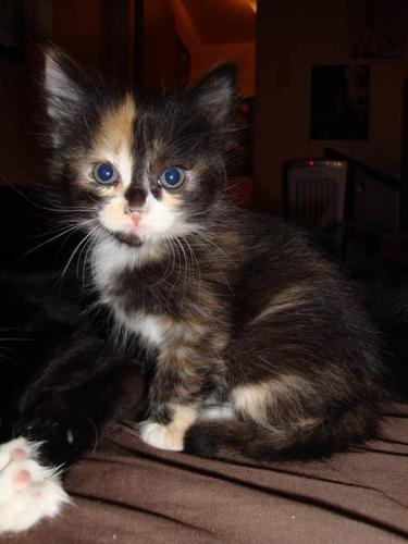 4 Kittens to go good homes