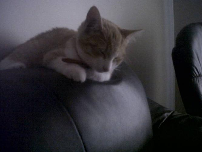 5 month old kitten in need of a home