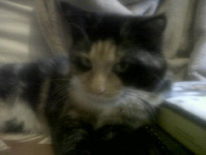 9 Month Old Cats, Need Home