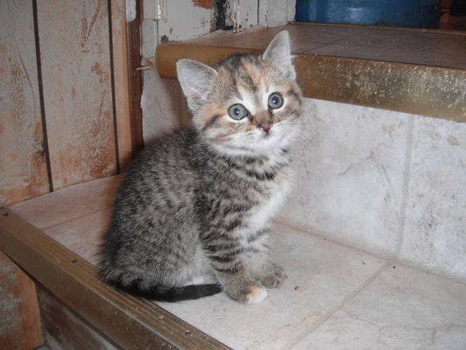 Adorable Kittens To Give Away