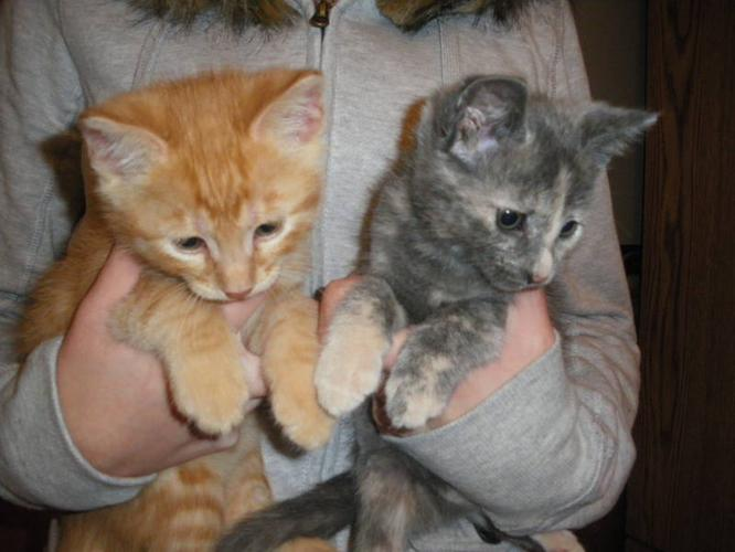 Beautiful house kittens for sale