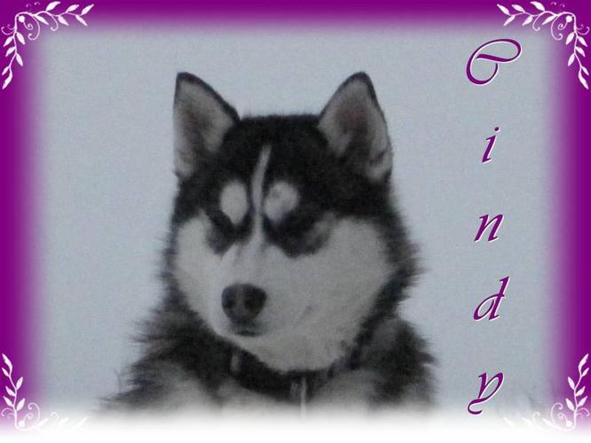 Beautiful Siberian Husky Puppies (ONLY 1 LEFT)