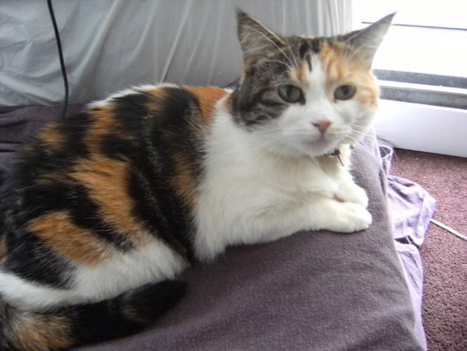 cat litter box diy