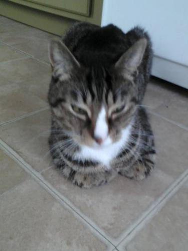 free 2 year old male cat neutered