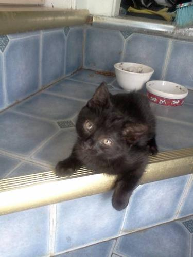 Free male kitten looking for a forever home