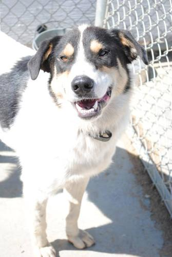 Handsome Dog with a Great Smile for adoption! FREE UNTIL DEC 31