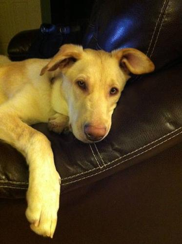 Keela is looking for her forever home!