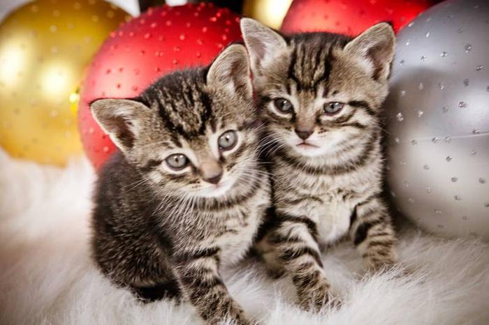 Kittens for Free for Christmas