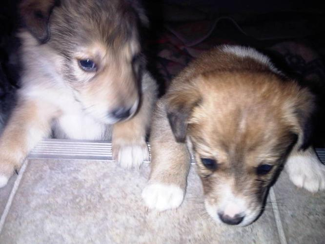 Dogs Or Puppies For Sale In Saskatoon