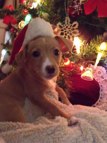 Puppies Ready For Good Homes with Good Owners