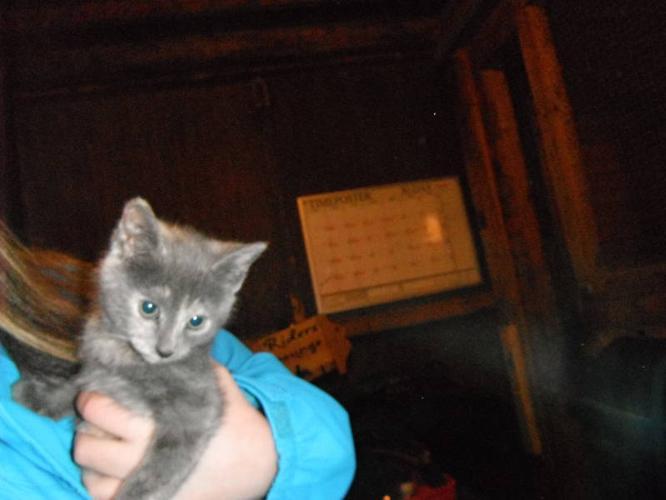 SOLD- Kitten Needs a Home ASAP