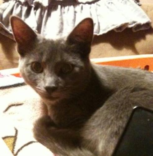 Summer. A grey cat