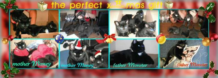 The lovely black kittens are looking for good family.