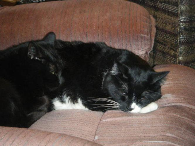 Two loving cats looking for a loving home!!!!