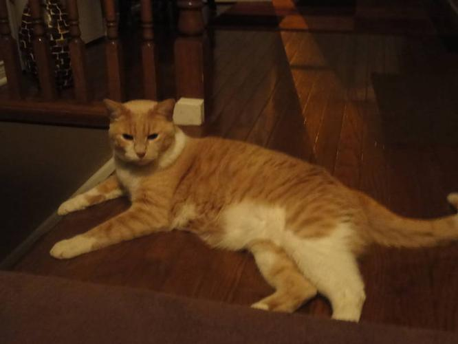 Two male cats to give away to a good home - together or separte