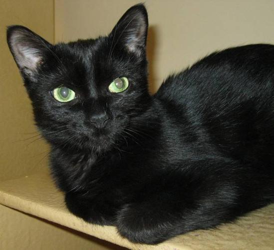 URGENT: Permanent Foster Needed for Feline Leukemia Cats
