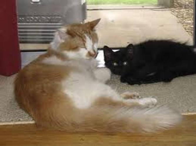 Wanted: Orange and White kitten :o)