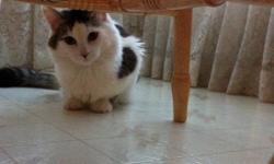got a grey and white male cat $50 comes with scratching post, food dishes, food and litter box. need to get rid of due to allergies he is a very playful cat has tons of energy loves to get chased and chase you, will cuddle up to you at night and pur. This