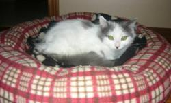 One black is 4 years old, Spayed all shots. One white 2 years old, Spayed all shots.   Can have one cat or both, prefer to take them both because they have been together for 2 years.   They come with food, food dishes, toys, bed.   Both good cats, have to