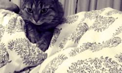I have two lovely, friendly, well trained indoor cats available for adoption. I love them so much but my allergies have been so bad since I adopted them 3 years ago. I'm also moving and they are unable to come with me otherwise I would still deal with the
