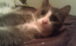 I have two adorable female kittens that I am looking to find a good home for. They were abandoned, so I have no medical history, but they seem to have been well cared for and seem to be in overall good health. The date of birth I entered into the ad is