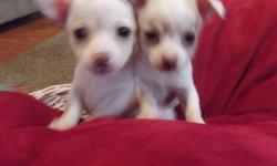 Born on Oct 6, 2011 I have 1 white and tan female and male who are getting vet checked and their first needle and deworming this weekend and will be ready to be re-homed by Dec 1st. They are good with kids and other animals and just a bundle of joy. They