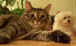 2 Yr Old Tabby : $75 adoption fee I am very saddened to have to even give up my baby girl. Since she is now full grown, I have developed allergies to her. I thought by maybe keeping my place clean from top to bottom and being on allergy meds, I could
