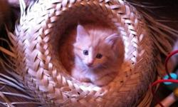5 kittens need to be gone ASAP ,looking for a good home!! contact by email or phone 778 995 4399