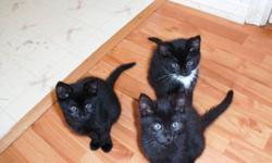 I`m looking for some homes for my kittens. There is TWO boys and ONE girl. All are very loveable and play full!! You can call or text me at 371-5069.  If you would like to see more pictures feel free to message.