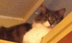 Izzie is a 3 year old gray and white long fur, spayed cat. She is super cuddly and loves attention. Izzie is used to small children, other cats and a medium sized puppy. We aren't looking forward to her leaving our family but we just can't give her the