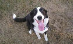 Zach is a kind hearted dog, we dont know for sure if hes 4 or 5 yrs old, but he is healthy.  A quick and fast dog, who LOVES attention, almost to a fault, but with him being the third in the house, he would be better of in a different enviroment.  He's