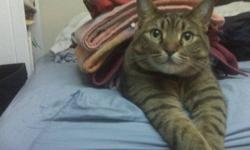 Students are looking to find a home for a 4 year old Tabby cat named Jag. She is a fun, loving, cuddly cat who is shy at first, but warm up to people. She has had all her shots and she's declawed in the front paws. She wouldn't be good around children, so