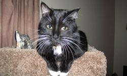 We are looking for a loving home for our loveable 4 year old short hair cat. (Destiny). She is VERY affectionate and just CRAVES love- which she deserves. Unfortunately we are having problems with her since our daughter was born 1 year ago. She has
