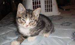 2 female tiger stripe kittens are clamed and will be gone on the 19th we also have 2 other kittens that where both claimed that have been backed out on 2 males here are the pics