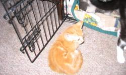 Hi my name is jodi and i have a group of fuzzy cute kittens looking for good homes some pictures included please give me a call at 250 461 9837 to come and veiw 5 boys 1 girl 1. orange girl -ADOPTED 2. Orange white male-ADOPTED 3. black/ white