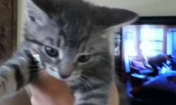 I have 6 kittens They are Very! Playful , They Eat Well , They No Longer Need Mom believe it or not they don't pay attention to her lol .. We already have 2 Cat's , Plus 6 Kittens makes it ALOT for a 2 bedroom apartment! Located in London Ontario , If
