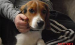 I need to rehome my Beagle. He is a very good dog very well behaved. Fully house trained and only barks when being played with or when someone comes to the door. I recently got switched to midnight shift and feel my poor dog is being neglected while I am