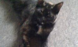 Black and brown calico kitten in need of good home This ad was posted with the Kijiji Classifieds app.