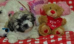 We currently have some Schichon puppies (ShihTzu-Bichon) also known as teddy bear puppies. They are friendly, energetic, and already potty trained! They also come with shots and birth certificates. Their prices are ranged from $550-$800 depending on the