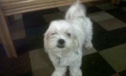 She is cute and adorable, friendly with everybody and other dogs. Casey is 9 months old and spayed. All the shots are up to date, the next shot will be in February 2012. She is potty trained and Crate trained. She needs a new home with back yard as she is