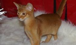 2 Beautiful abyssinian kittens available.  We are both reds one male and 1 female.  We come with a veterinary health record and have had our vaccinations    phone 250-516-4201