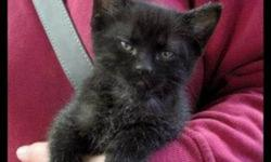 The Sault Humane Society has many kittens of all ages waiting for homes.    Special for adopting 2 pets.  Seniors 55 and over Discount every day of the month.   Shelter is open 7 days a week.