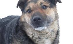http://www.SCARSCARE.ORG Hey people, I'm Bruins, I came to rescue as a stray dog. I am great guy that gets along well with dogs and cats off leash, however on leash I tend to make odd growly gruff noises, that really don't mean anything and I never seem