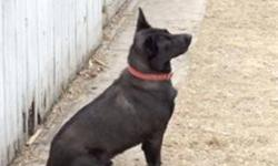Hi there, my name is Parker I am a spayed female. I used to be Quadra, and then I got a wonderful home with 2 other dogs and a boy that just loved me to bits. Sadly, the boy in my house was diagnosed with a rare and very serious medical illness, and so