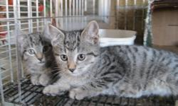 We have a nice selection of lovely kittens, males and females, dewormed. Looking for good homes. Ten minutes north of London.  519-666-1049