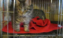 We have a nice selection of kittens, males and females, dewormed and ready to go to their new homes.   519-666-1049