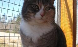 Breed: Dilute Calico Dilute Tortoiseshell   Age: Adult   Sex: F   Size: M DOB May 25, 2010 Pecan is a very pretty little girl; a dilute calico with grey and white and a touch of cinnamon on her face. She was rather shy when she came to us, but she has